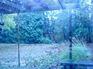 Winter-ready Back Garden Being Hammered by Rain and Wind