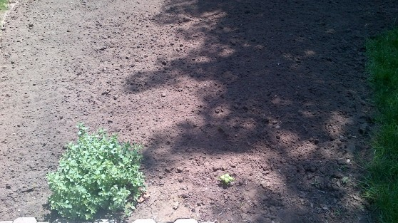 Soft soil after rototilling