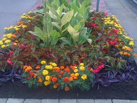 Sidewalk flower garden