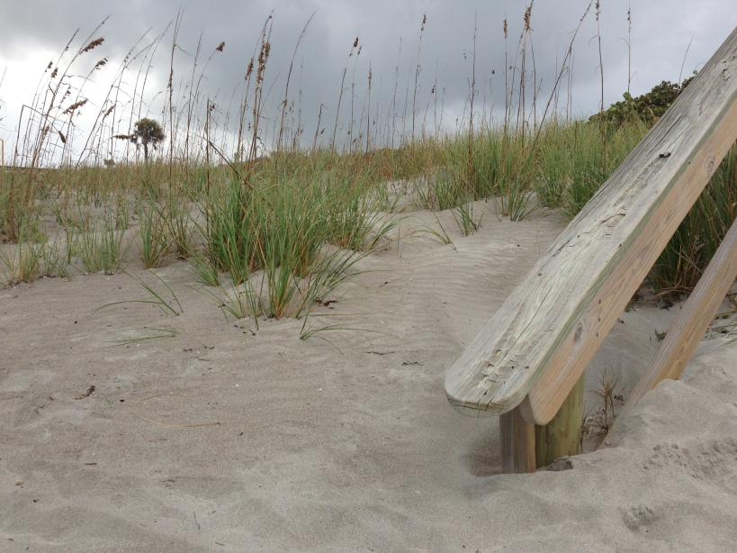 beach grasses and railing
